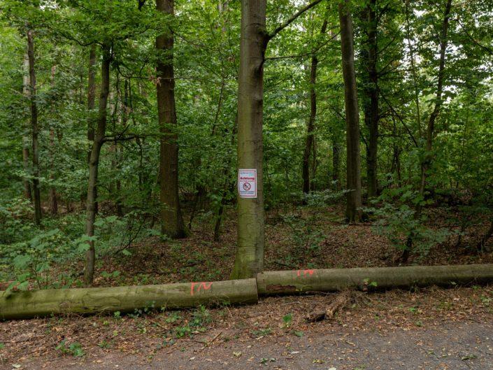 Im Wald von Schöneck