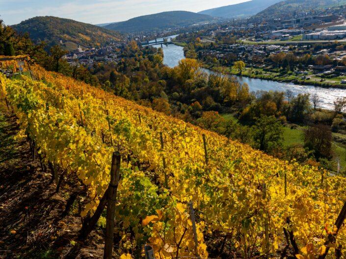 Weinberge bei Erlenbach (Bayern)