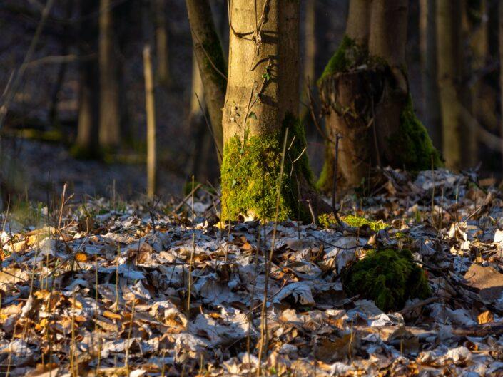 Lichtspiel im Wald von Schöneck