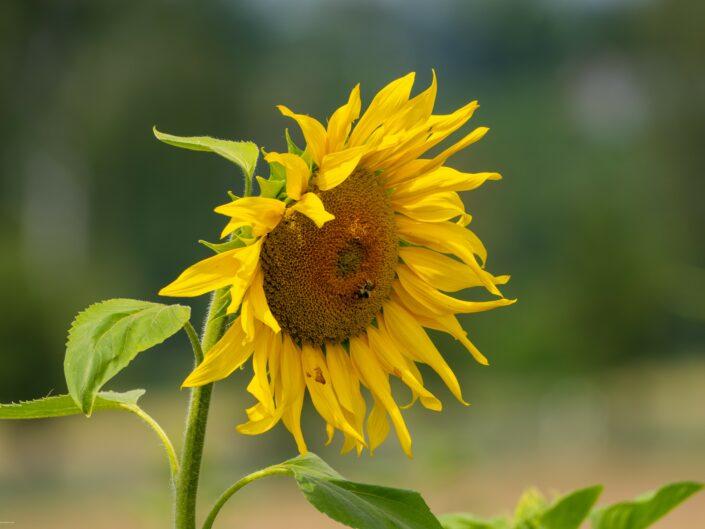 Sonne tanken, natur genießen